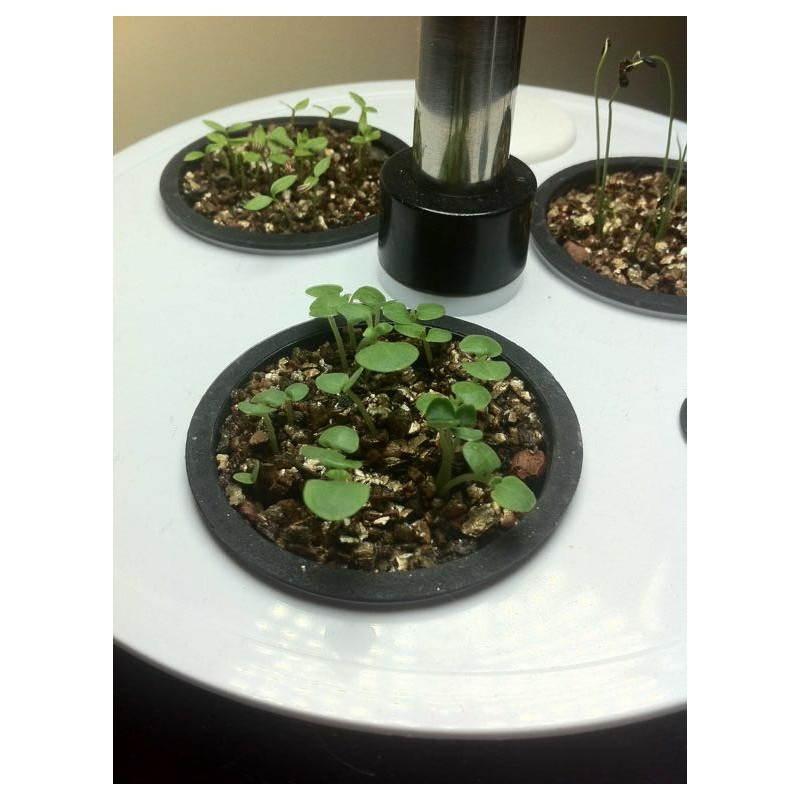 Giardiniere della coltura idroponica per la cultura interna automatica POME (piccolo, nero) - image 23866