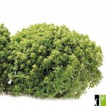 Starter Kit herb and nutrient VERTUE